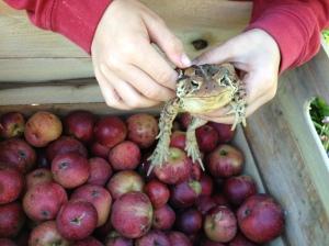 kingston black redbyrd orchard cider