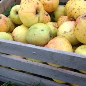 poundsweet redbyrd orchard cider