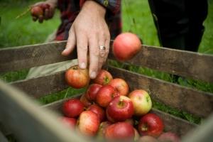 Redbyrd Orchard Cider Eric Shatt