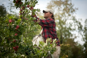 Redbyrd Orchard Cider
