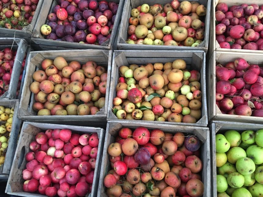 Redbyrd Orchard Cider's certified biodynamic cider apples. Photo Credit: Redbyrd Orchard Cider